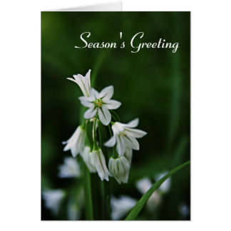 Holiday Season Greeting Cards - White Floral Card