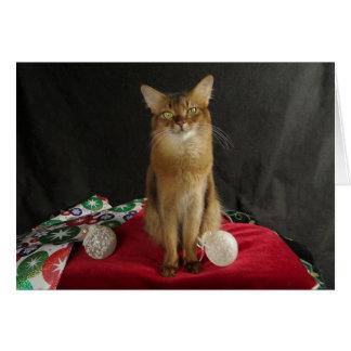 Holiday Somali Cat, featuring Summer Samba Card