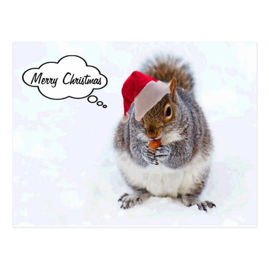 Holiday Squirrel Postcard