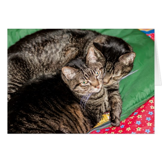 Holidays - Christmas - Everyday - Two Cats Card