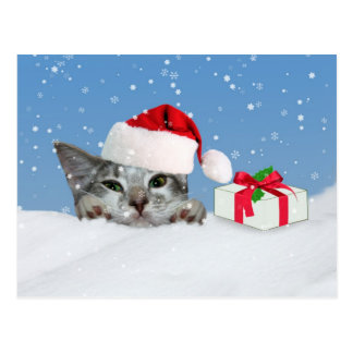 Holidays, Kitten in Santa Hat Postcard