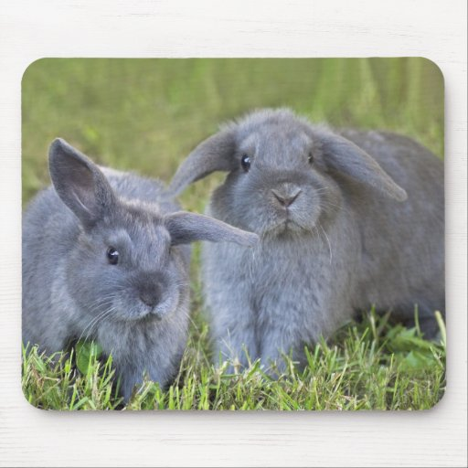 Holland Lop Bunnies Mouse Pads