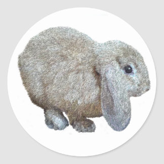Holland Lop Ear Rabbit Stickers