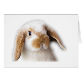 Holland Lop Greeting Card