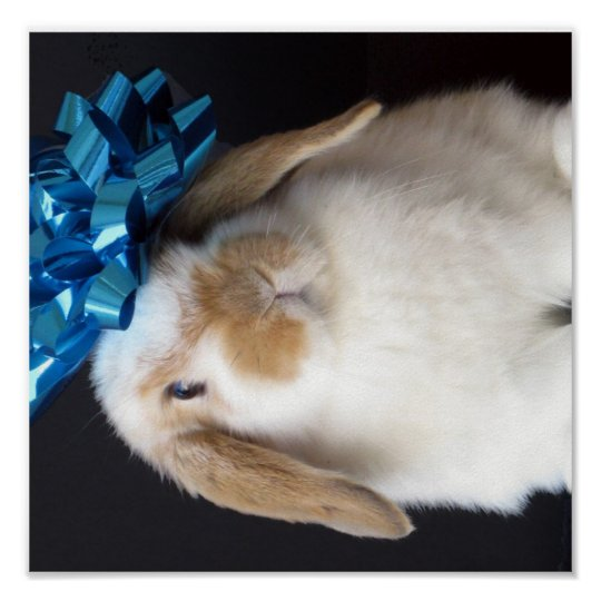 Holland Lop Present Bunny Poster