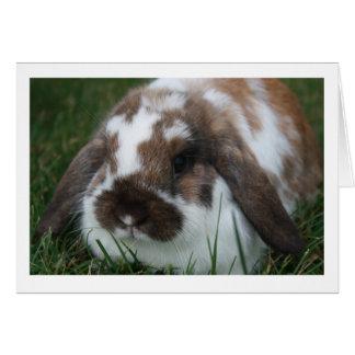 Holland Lop Rabbit Blank Card