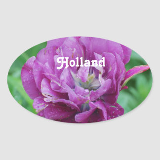 Holland Tulips Oval Sticker