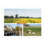 Holland Windmill Tulips Amsterdam Dutch Landscape Post Card