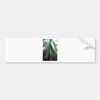 Hollow Redwood Bumper Stickers
