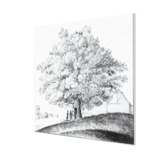 Hollow Tree at Hampstead, 1663 Canvas Print