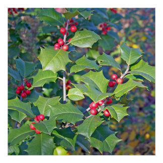 holly berrie nature print