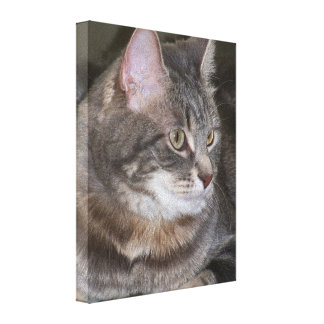 Holly Eyeing Something Gallery Wrap Canvas
