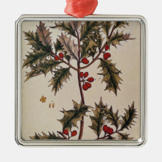 Holly from 'A Curious Herbal', 1782 Christmas Ornament
