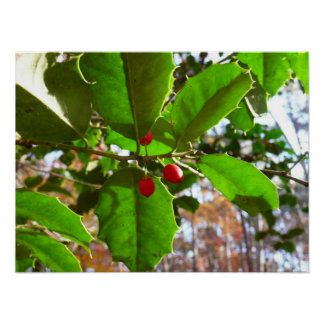 Holly Leaves II Holiday Nature Botanical Poster