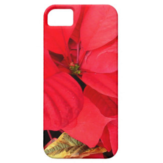 Holly Point Poinsettias Christmas Holiday Floral iPhone 5 Covers