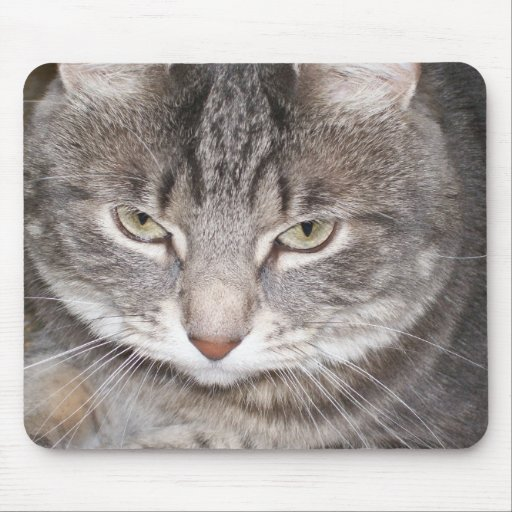 Holly the Cat Mousepad