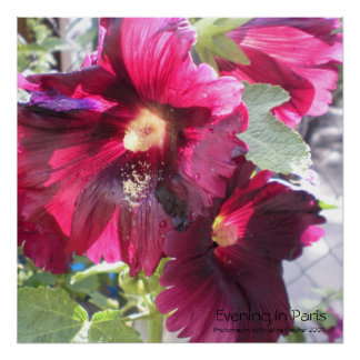 "Hollyhocks ""Evening In Paris"" Print"