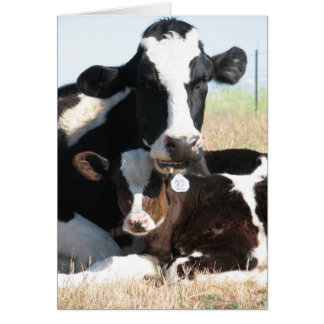 Holstein cow and calf card