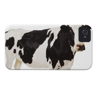 Holstein cow (Bos taurus) iPhone 4 Cover