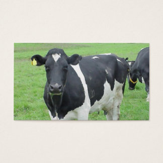 Holstein Cow Cattle Bull Steer Heifer Farm Range Business Card
