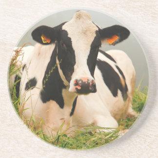 Holstein cow coaster