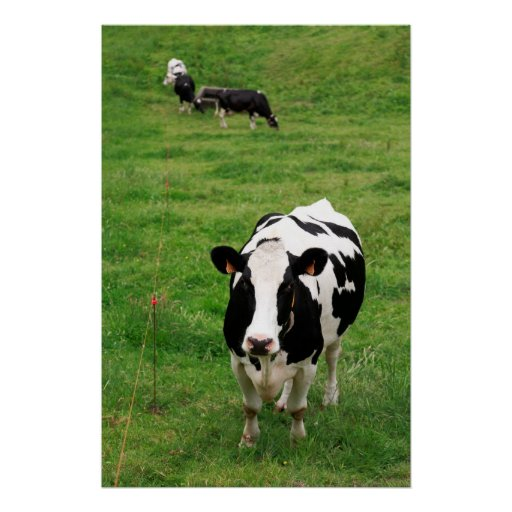 Holstein cow print