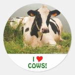 Holstein cow round sticker