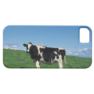 Holstein cow standing in field, Bekkai-Machi, Case For The iPhone 5