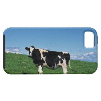 Holstein cow standing in field, Bekkai-Machi, iPhone 5 Case
