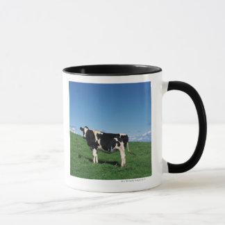 Holstein cow standing in field, Bekkai-Machi, Mug