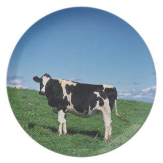Holstein cow standing in field, Bekkai-Machi, Plate