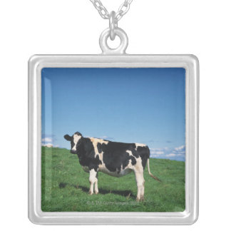 Holstein cow standing in field, Bekkai-Machi, Silver Plated Necklace