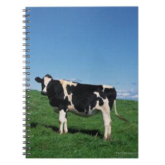 Holstein cow standing in field, Bekkai-Machi, Spiral Notebook