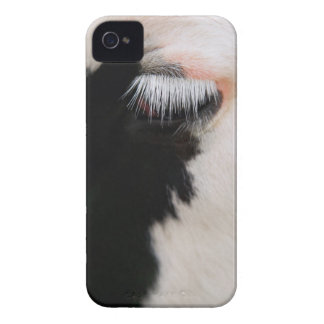 Holstein cow's face, close-up of eye Case-Mate iPhone 4 cases