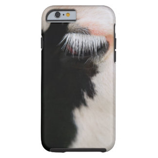 Holstein cow's face, close-up of eye tough iPhone 6 case