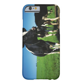 Holstein cows in a field barely there iPhone 6 case