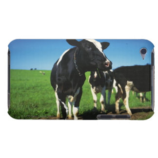 Holstein cows in a field iPod Case-Mate cases