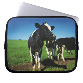 Holstein cows in a field laptop sleeve
