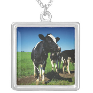 Holstein cows in a field silver plated necklace