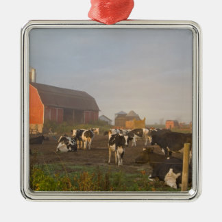 Holstein dairy cows outside a barn at sunrise christmas ornament