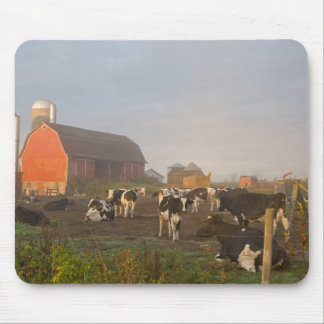 Holstein dairy cows outside a barn at sunrise mouse mat