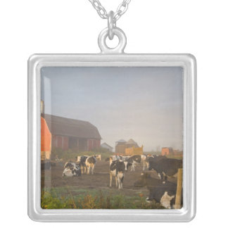Holstein dairy cows outside a barn at sunrise silver plated necklace