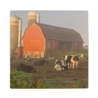 Holstein dairy cows outside a barn at sunrise wood coaster