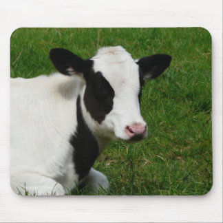 Holstein Dairy Milk Cow on Grass Mouse Mat