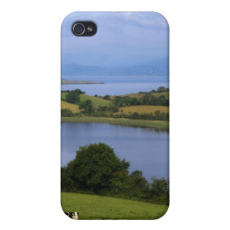 Holstein-Fresian Cle, Bantry Bay, Co Cork, iPhone 4/4S Cover