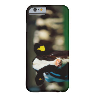 Holstein-Friesian calf Barely There iPhone 6 Case