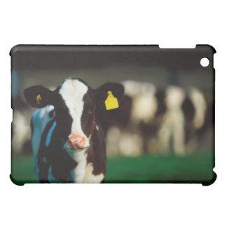 Holstein-Friesian calf iPad Mini Cover