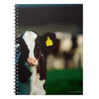 Holstein-Friesian calf Notebooks