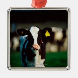 Holstein-Friesian calf Silver-Colored Square Decoration