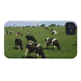 Holstein-Friesian cattle, Ireland Case-Mate iPhone 4 Case